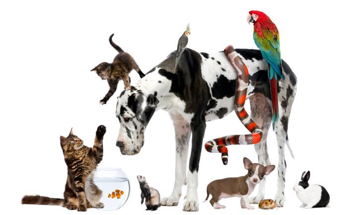 Reiki and Pets