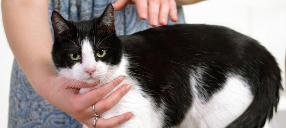reiki-healing-cat-1180x480-980x440
